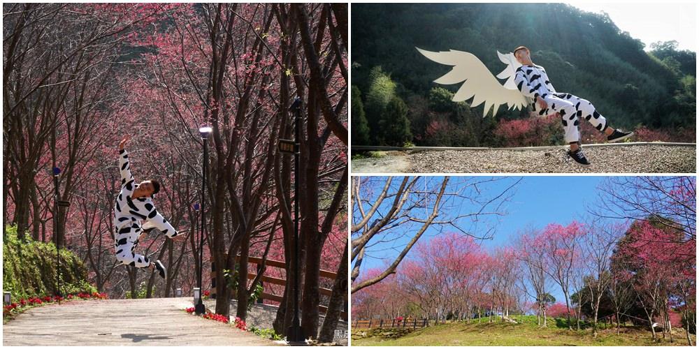 桃園新景點。翠墨莊園│賞櫻花熱門景點,寒假春節必排行程,日本和服體驗