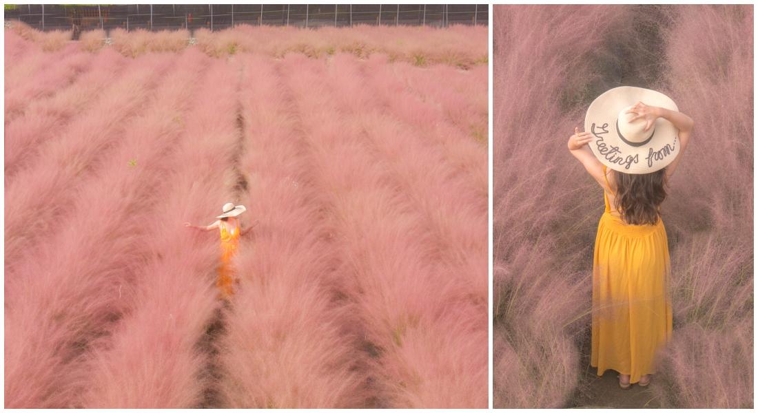 南投新景點。和平快樂田園|全台首創粉黛亂子草,免去韓國,就在南投集集